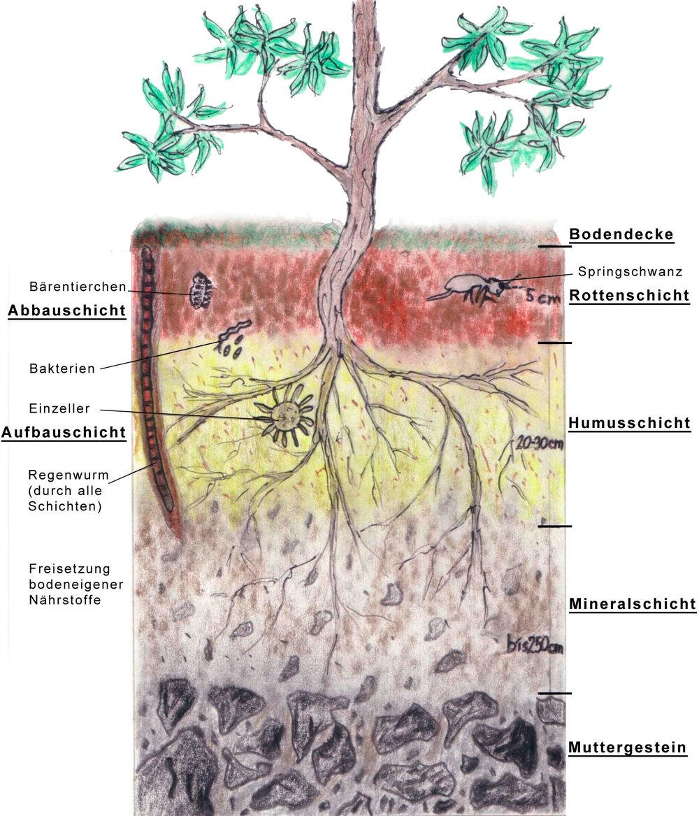Land ober sterreich humus und bodenaufbau for Definition von boden