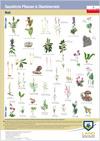 Plakatserie Geschützte Pflanzen und Tiere 2016
